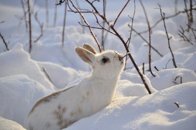 rabbit-2910054 1920