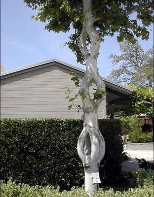 Amazing tree 2
