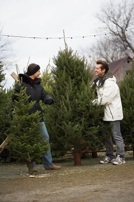 Christmas tree choosing