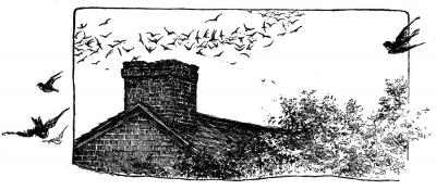 chimney birds