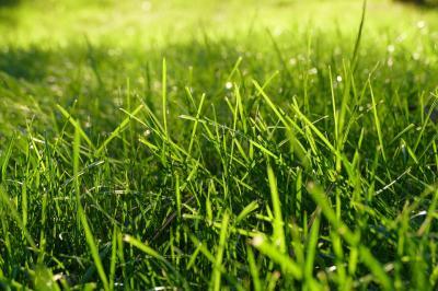 grass-1147851 960 720
