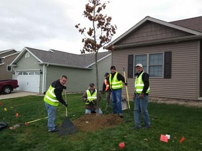 Volunteers plant trees in Washington IL one year after tornado strikes.