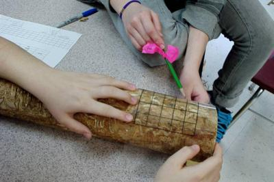 Students measure damage to a tree trunk caused by Emerald Ash Borer (picture credit-C. Flower)