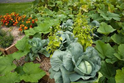 Seed garden veggies