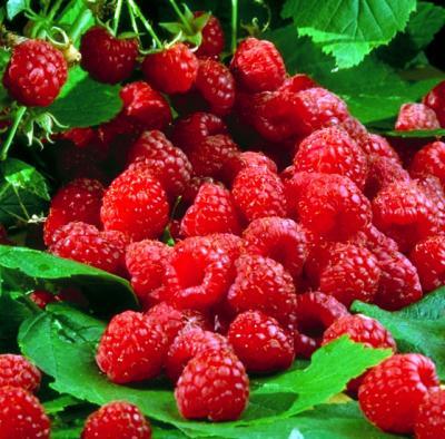 cover raspberry