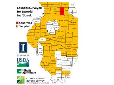Corn Survey 2016 confirmed map