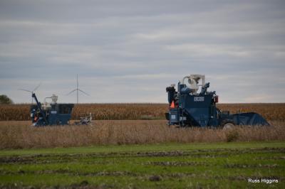 2013 diers harvest