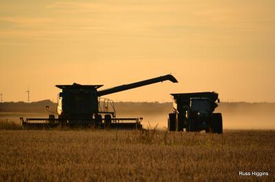 2013 harvest