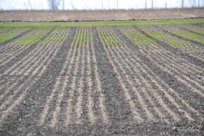 wheat 2014 Apr