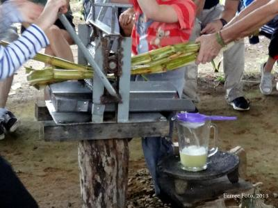 Rhonda Ferree pulls sugarcane through a press in Costa Rica.