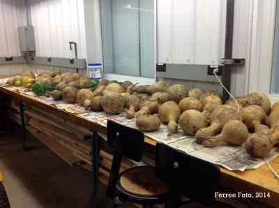 Ornamental gourds drying