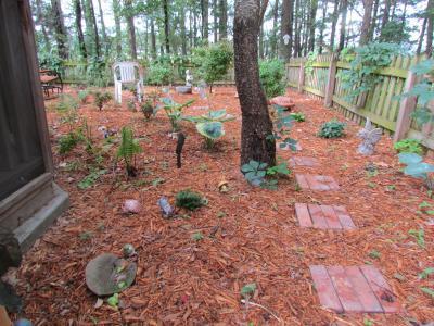 shade garden on 6-11-12