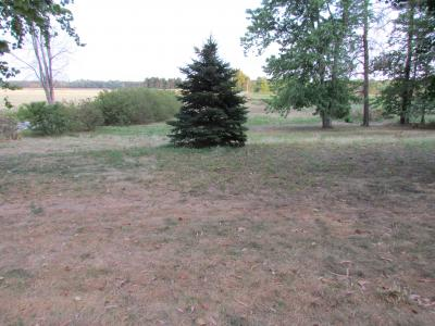 Part of yard without irrigation on 7-13-12 NOTE: We are watering the spruce tree!