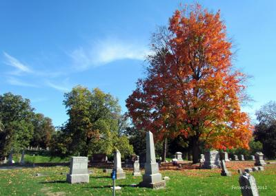 sugar maple at oak hill cemetery in Lewistown, IL