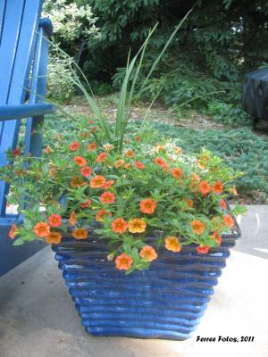 Blue ceramic pots planted with a green spike for height and orange calibrachoa for the container%u2019s fillers and spillers.