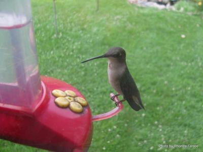 Hummingbird on feeder in 2011