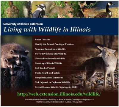 living with wildlife website