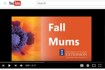 Videos available on YouTube /go.illinois.edu/ferreevideos