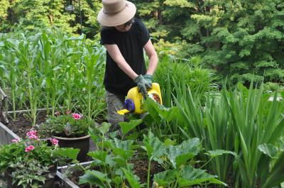 Preen Natural Vegetable Garden Weed Preventer is made with 100 percent corn gluten.