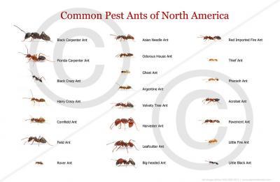 Alex Wild ants