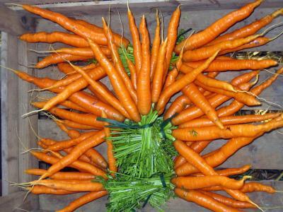 Carrots Bill Davison