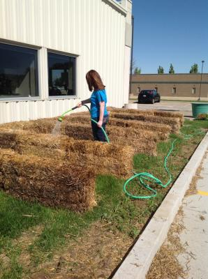 Cooking and Watering our bale