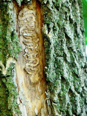 Kelly Estes Larvae tunnels
