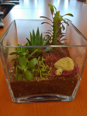 Terrarium Kelly Allsup final