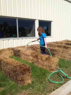 watering the strawbale