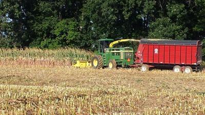 corn silage