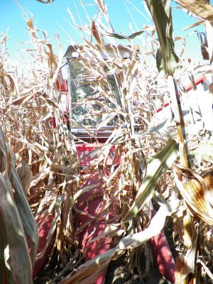 Figure. Kincaid 8-XP small plot combine harvesting corn at the NWIARDC.
