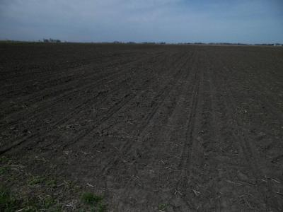 Figure. Notice that corn seedlings have not yet emerged on April 14 in a plot planted to corn on April 1.