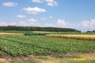 Figure. Crop rotation/tillage study started at the NWIARDC in 1996.