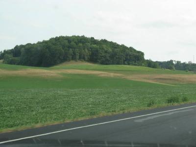 Figure. Drought damaged alfalfa in Southwestern Wisconsin, July 7, 2012.