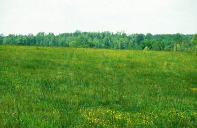 Figure. Tall fescue pasture (image: John D. Byrd, Mississippi State University, Bugwood.org).