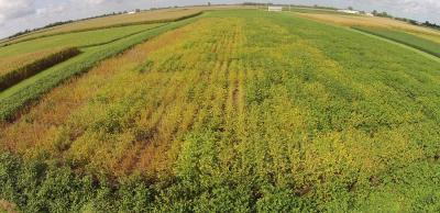 Figure. Aerial picture of the USB-sponsored Commercial SDS Variety Trial at the Northwestern Illinois Ag R&D Center in Monmouth in 2016. The difference in variety maturity is evident in this picture. Moving left to right are varieties in Early MG II, Late MG II, Early MG III and Late MG III. Many varieties in the Early II MGs are mature, many of those in the Late II MGs are nearing maturity, while those in MG III are not as far along.
