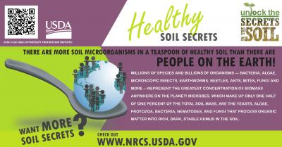 Soil Organisms-Teaspoon healthy Soil-NRCS