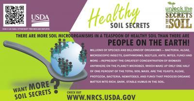 Soil Organisms-Teaspoon healthy Soil-NRCS