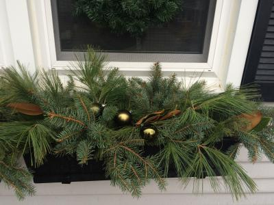 Evergreen Windowbox