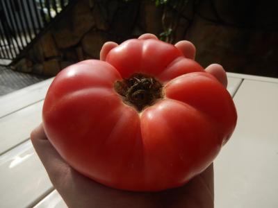 1 - Tomato  Pink Elephant