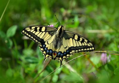butterfly-491166 1920