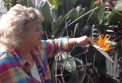 Master Gardener Pat Sollars in DACC Greenhouse