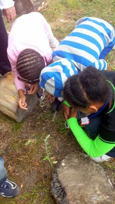 Looking for bugs under a log