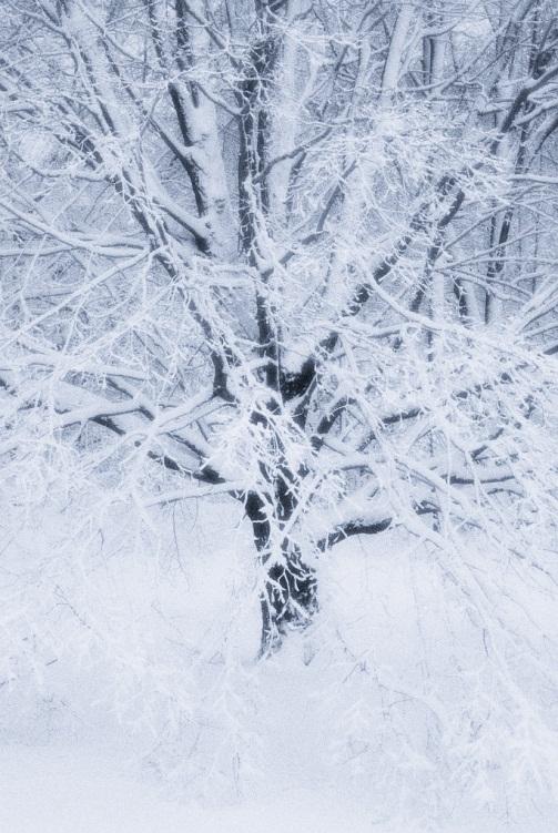 http://extension.illinois.edu/photolib/lib2358//snow.jpg