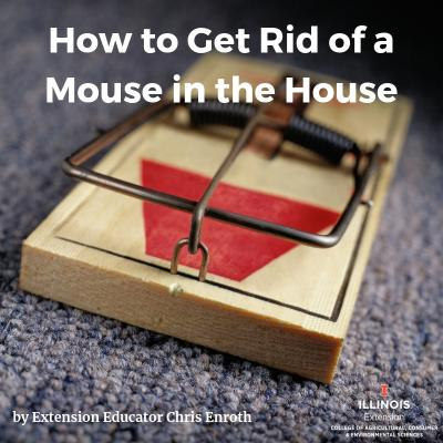 How to Get Rid of a Mouse in the House
