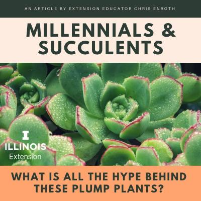 Millennials and Succulent