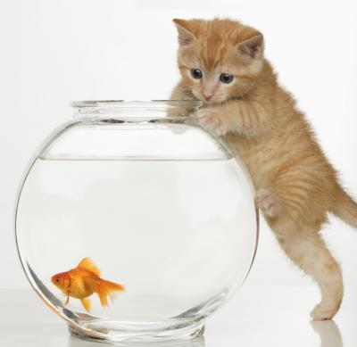 cat in fishtank