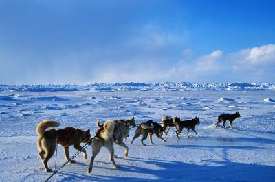 huskies mush