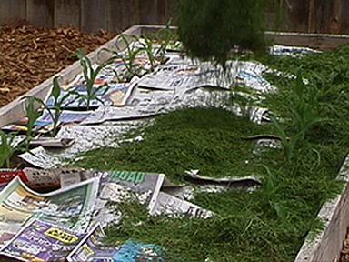 Grass-Newspaper-Mulch