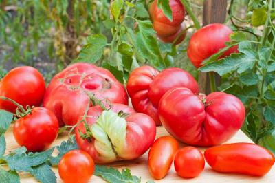 Inglorious-Tomato